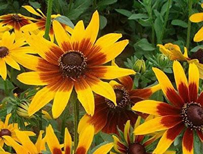 macam macam bunga untuk pekarangan