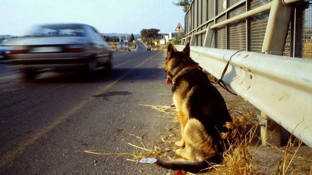 Хозяева привязали пса у дороги и не вернулись за ним