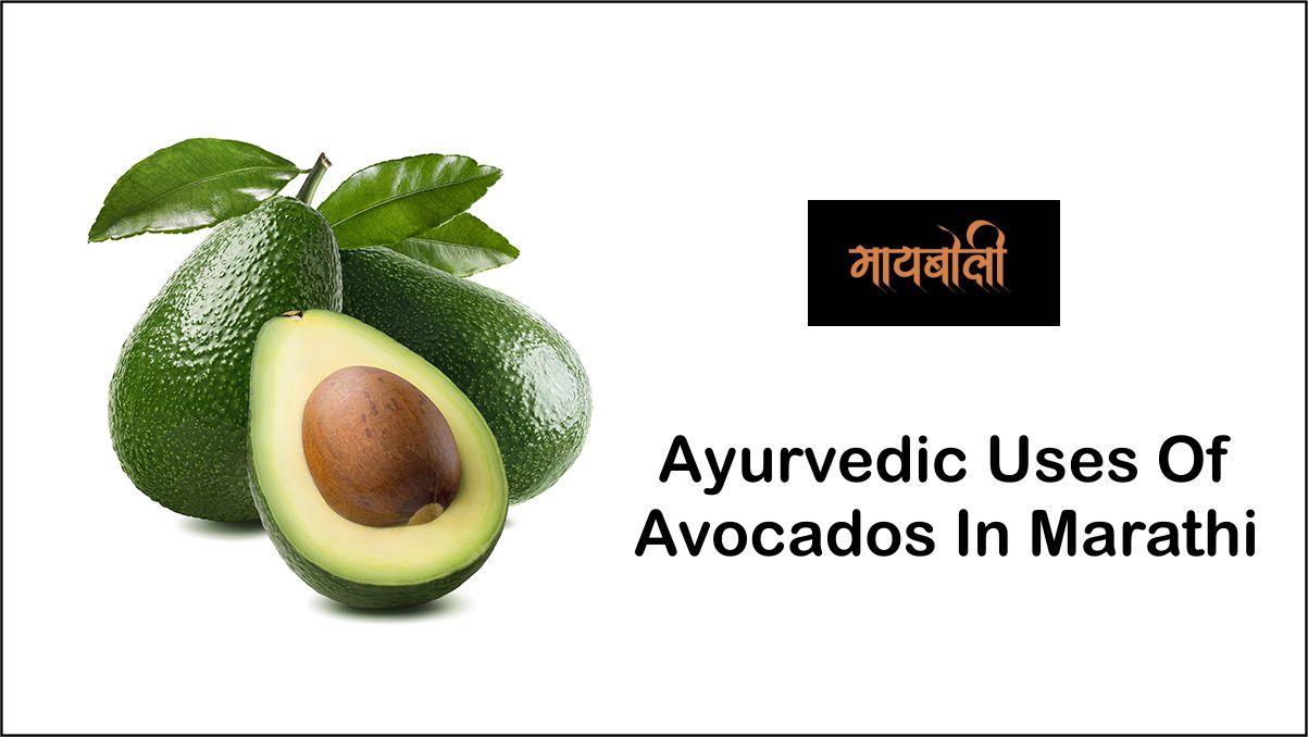 Ayurvedic Uses Of Avocados In Marathi