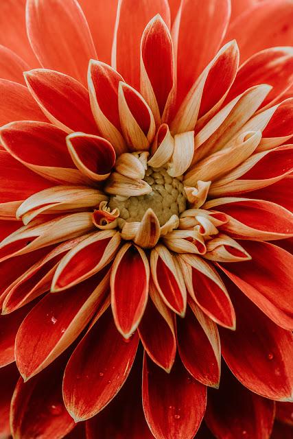 خلفيات ورود جميلة جدا صورة وردة جميلة 15