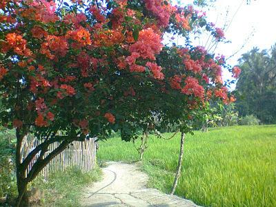Pedesaan di Bogor