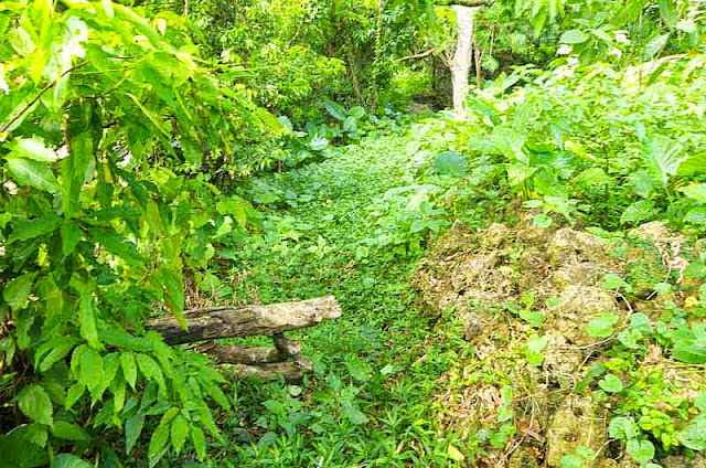 jungle, terrain, vegetation