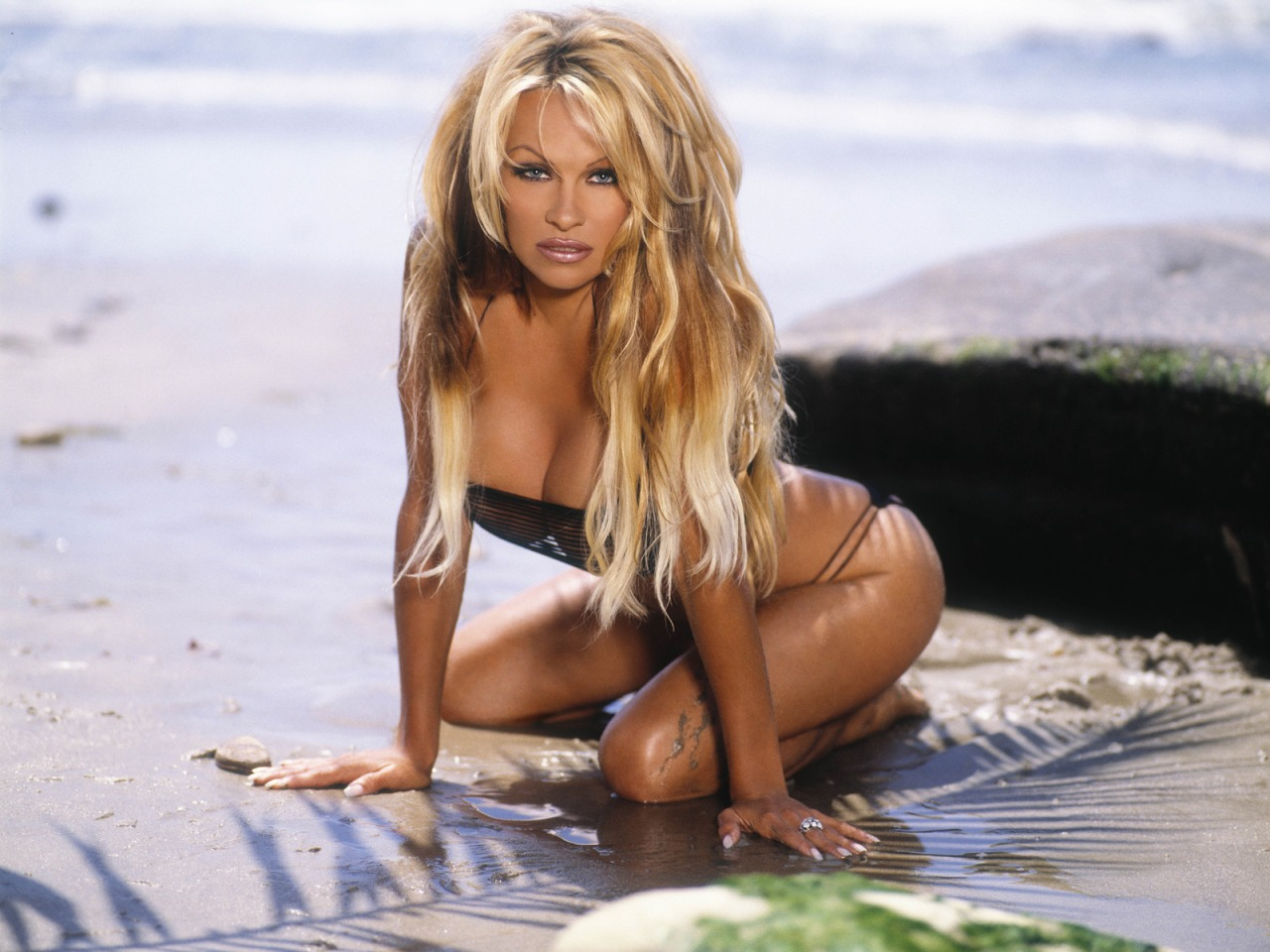 Pamela Anderson Profile and Pictures/Photos 2012 ~ HOT ...