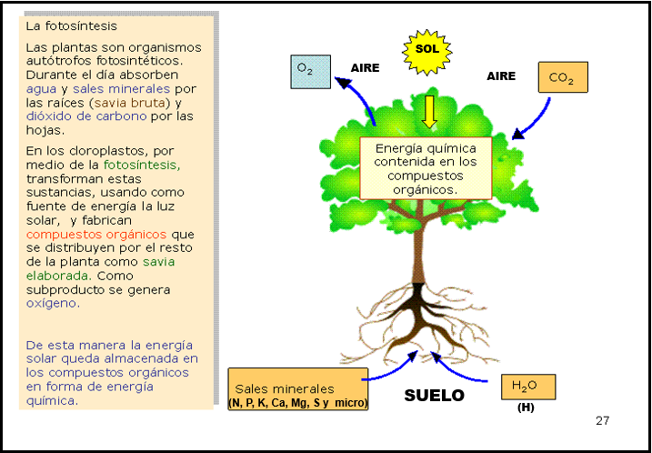 Fundamentos de la ciencia suelo sustento de vida terestre for Potasio para plantas