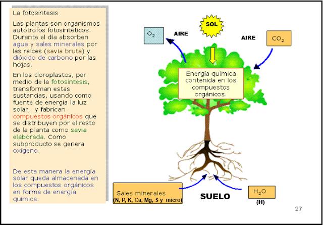 FUNDAMENTOS DE LA CIENCIA: HISTORIA DEL SUELO Y SU..