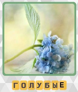 600 слов на столе лежат голубые цветы 8 уровень