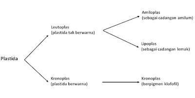 Biologi, Plastida, sel