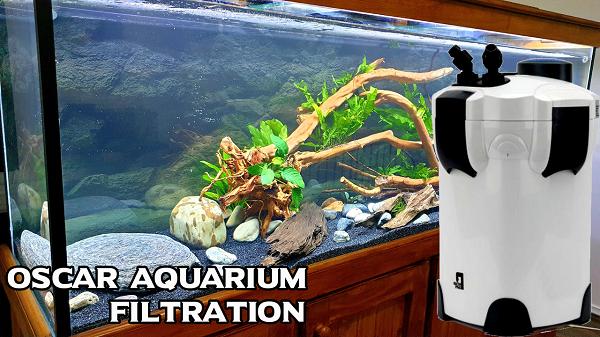 Oscar Fish Tank Filtration