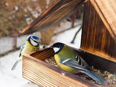 Plans For All Seasonal Birdfeeders   LMY NEWS