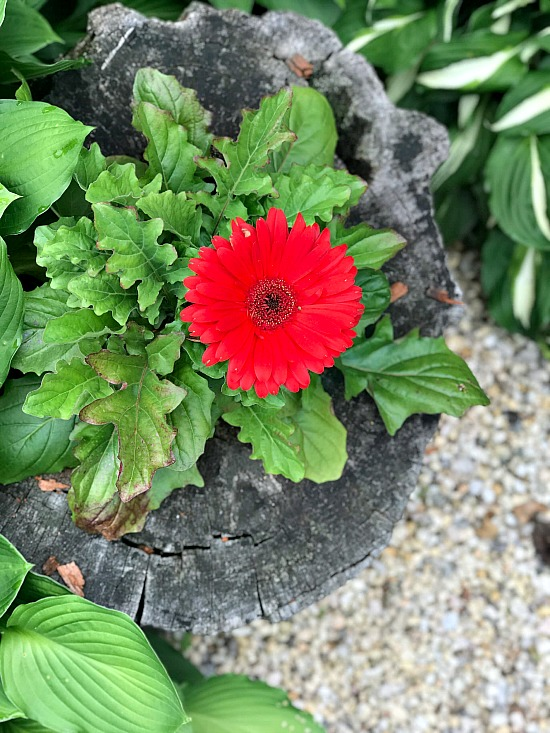 Make a DIY Garden Planter from an Old Stump