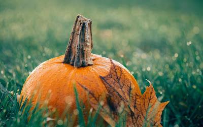 pumpkin in grass widescreen resolution hd wallpaper