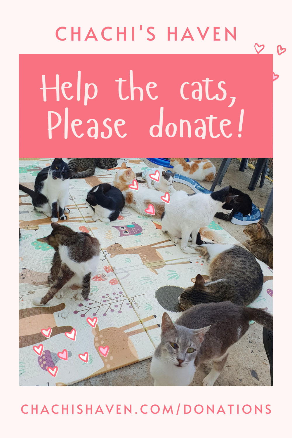 Great Ways To Help Animal Shelters, shelter, cat haven