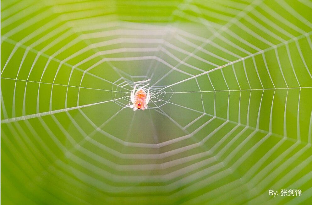 Макрофотография паутины