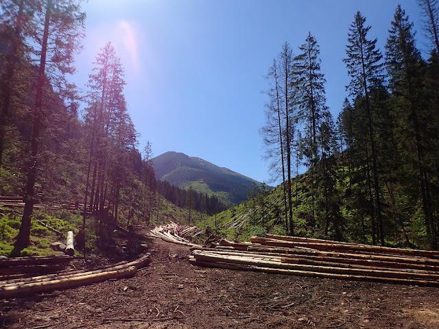 Dolina Chochołowska - ostatnie metry przed wejściem w las