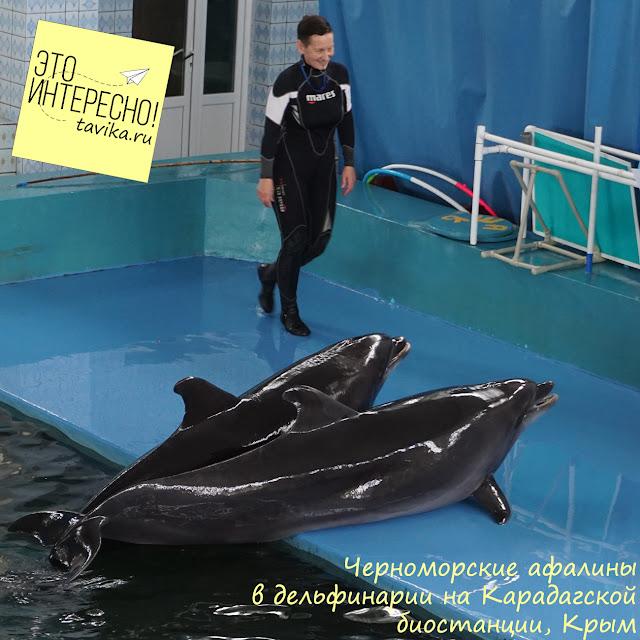 дельфины в дельфинарии Карадагской биостанции (пос.Курортное)