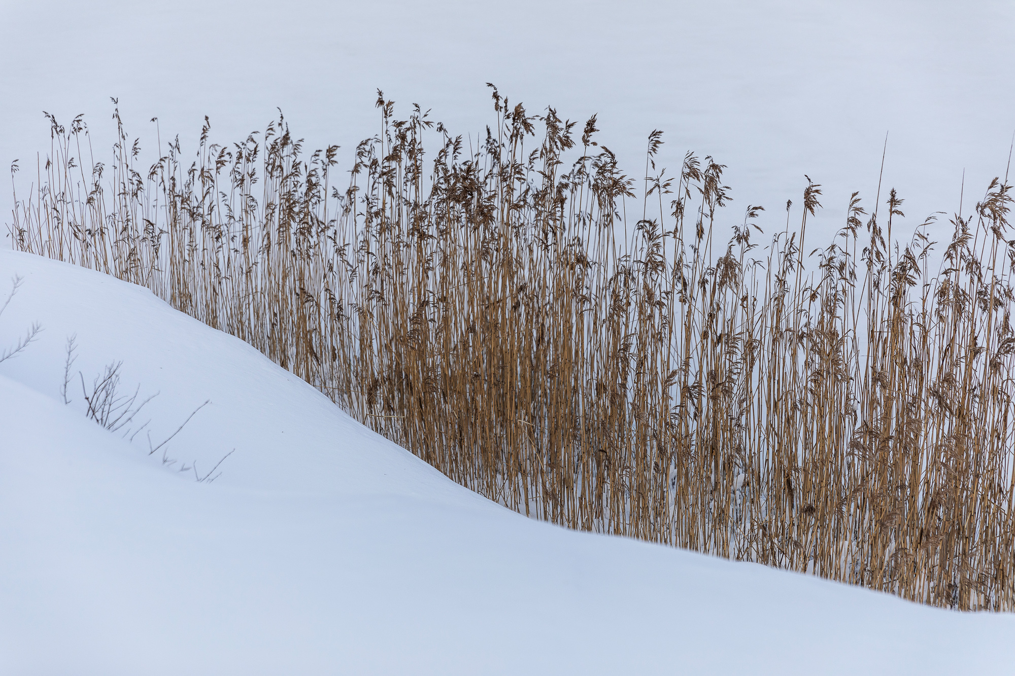 talvi, winter, suomi, finland, visitfinland, finlandphotolovers, luonto, nature, visualaddict, visualaddictfrida, valokuvaaja, photographer, Frida Steiner,, luonto, nature