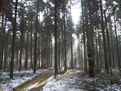 grzyby 2016, grzyby w zimie, grzyby w grudniu, grzyby pod śniegiem, las w zimie, zimowy spacer, zabawy na śniegu, uroki zimowego lasu