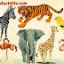 जाने वन्यजीवों के बारे में जिनकी प्रजातिया लगातार कम हो रही है - Why Wild Animals number decreasing?