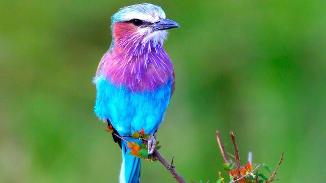 الطيور الجميلة تجلب لك الروح الطيبه