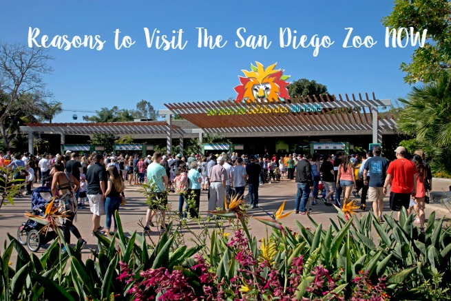 Reasons to Visit The San Diego Zoo NOW