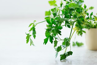 Growing herbs in Kitchen counter