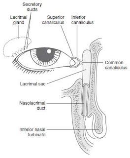 Lacrimal drainage system
