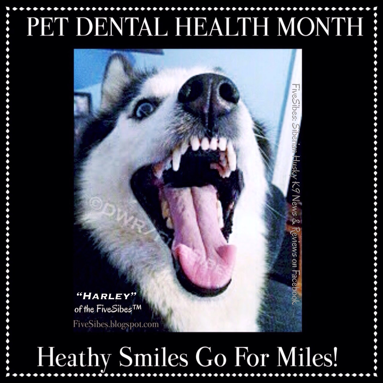 FiveSibes™: It's Leap Day! February is Pet Dental Health ...