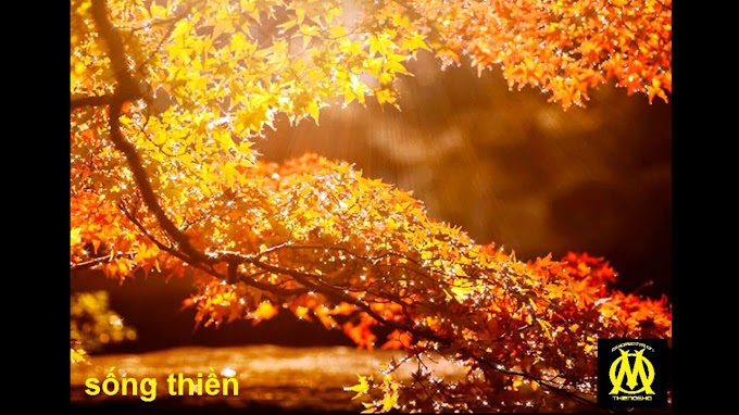 SỐNG THIỀN 0021 - Phật không có quy tắc vàng trong triết lý của ông ấy