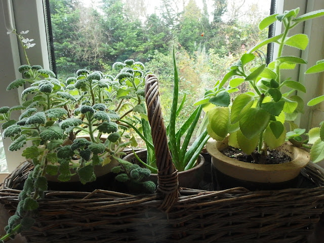 Windowsill greenery