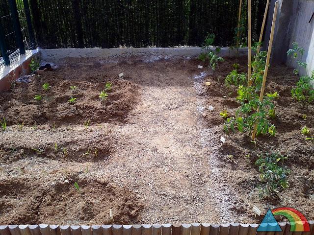 Huerto recién plantado