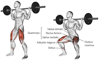 Top 5 Exercises For Building Legs, Barbell Squats