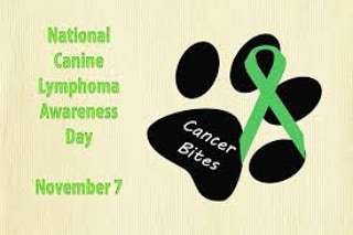 National Canine Lymphoma Awareness Day Wishes for Whatsapp