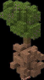 Árvore de azaleia com os blocos, Terra enraizada e Raízes suspensas, debaixo dos troncos da árvore