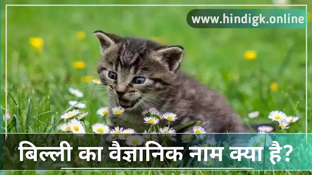 बिल्ली का वैज्ञानिक नाम (Billi Ka Vaigyanik Naam)