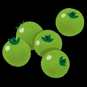 ミニトマトのイラスト(緑)