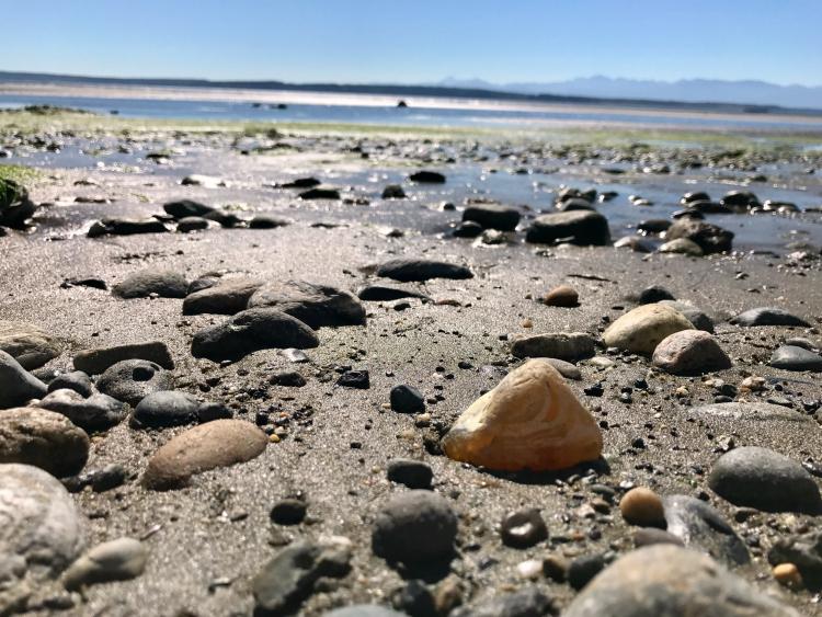 Maxwelton Beach, Whidbey Island, Clinton Washington, Maxwelton Beach agates, Whidbey Island agates