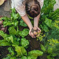 Aprenda a Cultivar Horta Orgânica em casa antes do colapso alimentar