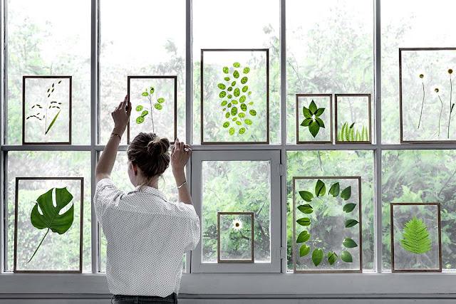 Herbier cadres transparents posés sur une fenêtre