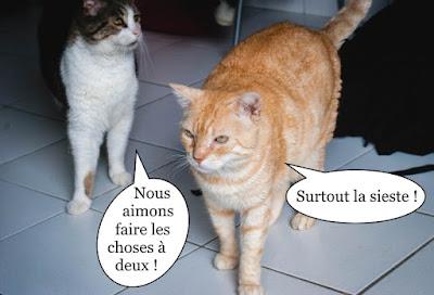 Deux copains chats inséparables !