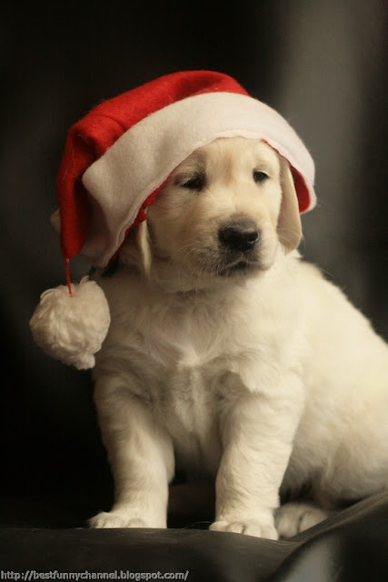 Cute Christmas dog.
