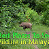 Best Places To See Wildlife in Malaysia