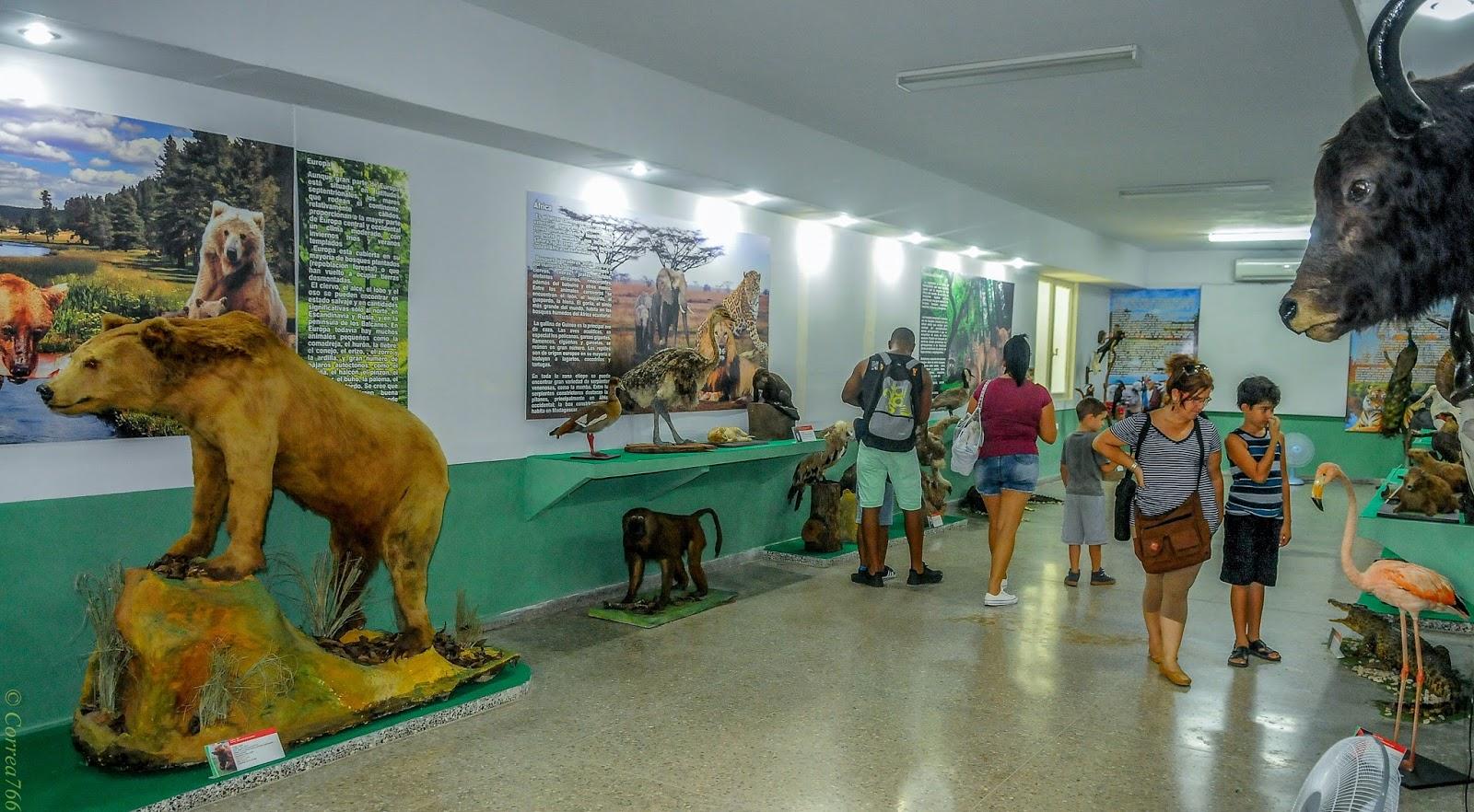 En el colimador zool gico de 26 el m s antiguo de cuba for Jardin zoologico de la habana