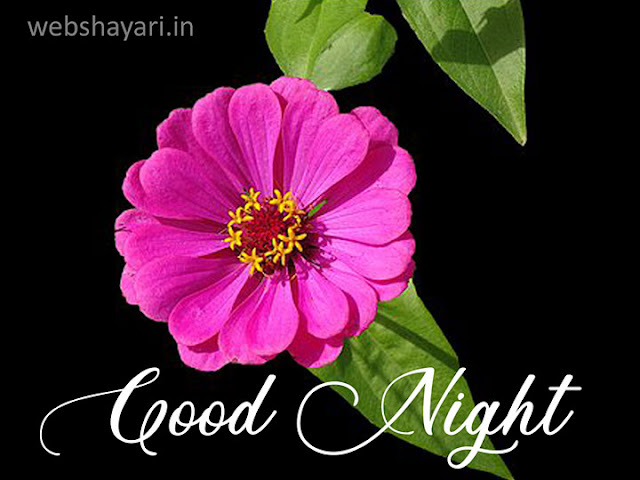 good night hd wallpaper with flower