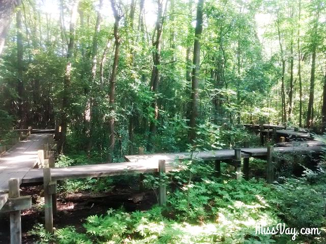Le parc-nature de Bois-de-Liesse Montréal