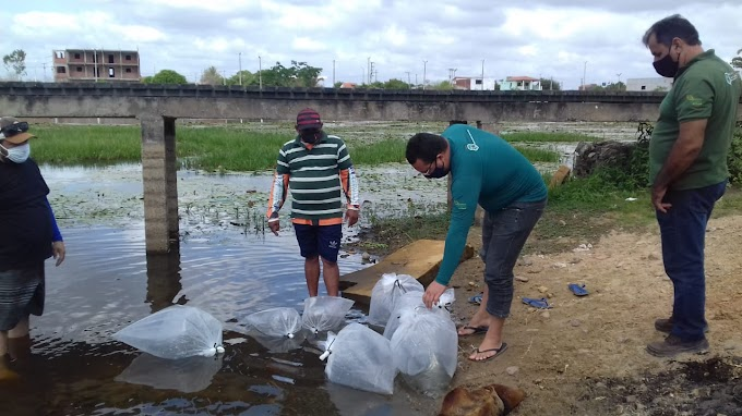 Projeto de Peixamento  beneficia açudes públicos de Cariré-CE