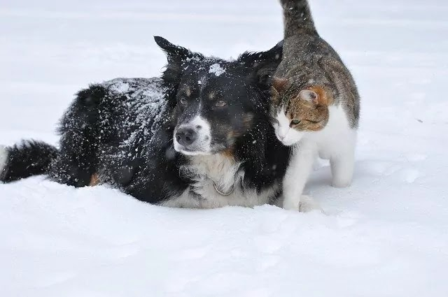 black dog with brown cat ice land