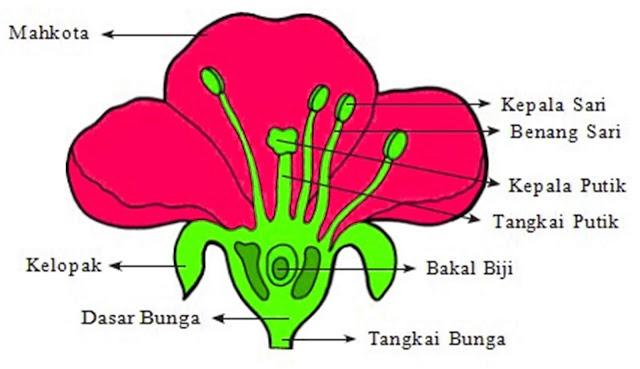 Sebagai contoh adalah ensiklopedia mengenai struktur-struktur bagian bunga dengan tujuan agar pembaca bisa membayangkan tampilan dan melihat informasi tersebut tanpa harus melihat bunga aslinya. Misal bagian kelopak bunga, putik bunga, tampilan benang sari bunga dan lain sebagainya.