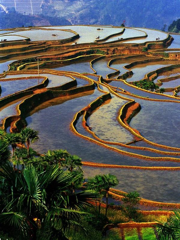 ภูมิทัศน์วัฒนธรรมนาขั้นบันไดหงเหอฮาหนี (Honghe Hani Rice Terraces: 红河哈尼梯田)