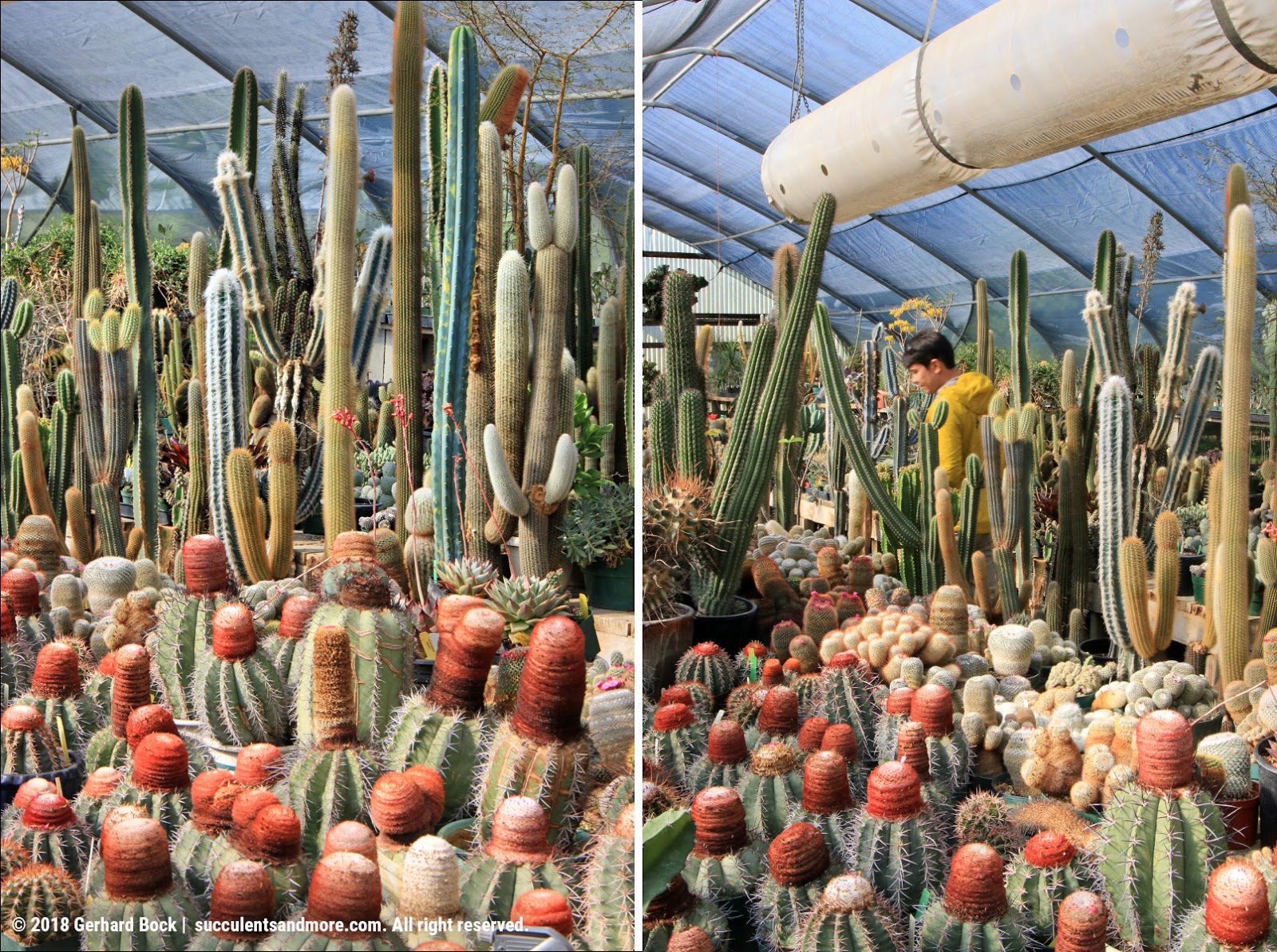 Cactus Nursery Part