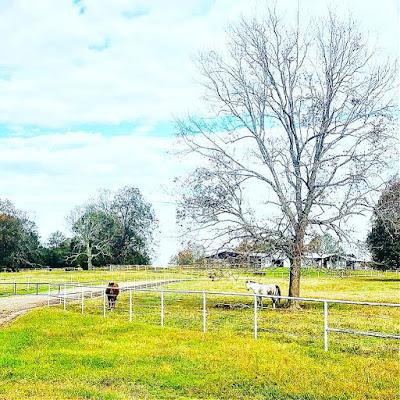 farm, horses, flowers, farming, athomewithjemma